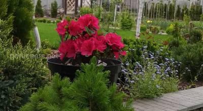 Сад своими руками