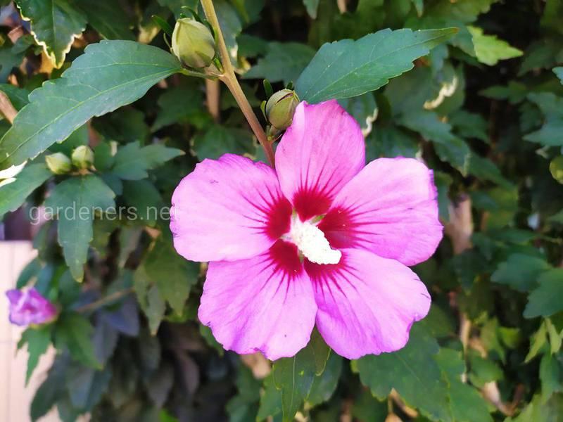 Какие цветущие кустарники можно посадить в саду?