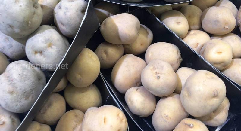 Топ-13 препаратов для защиты картофеля от вредителей