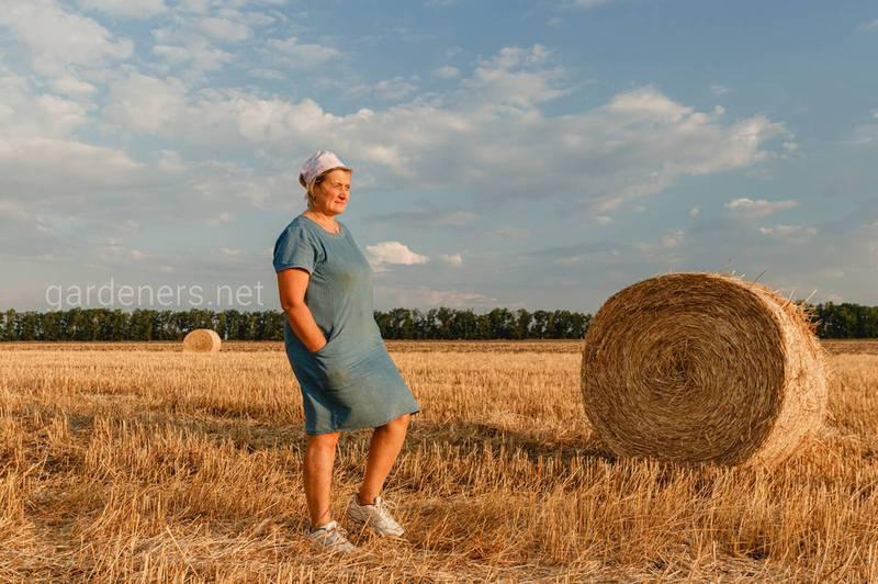 Что делать в поле после урожая пшеницы?