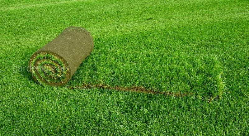 ТОП-5 видов и особенностей рулонного газона
