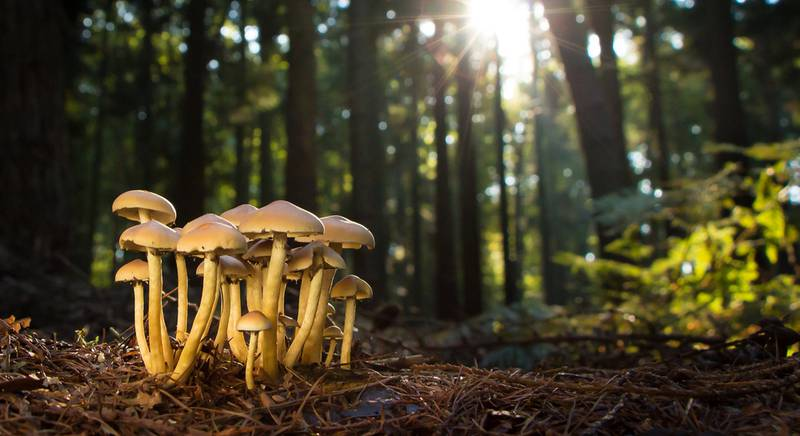 грибы в лесу.jpg