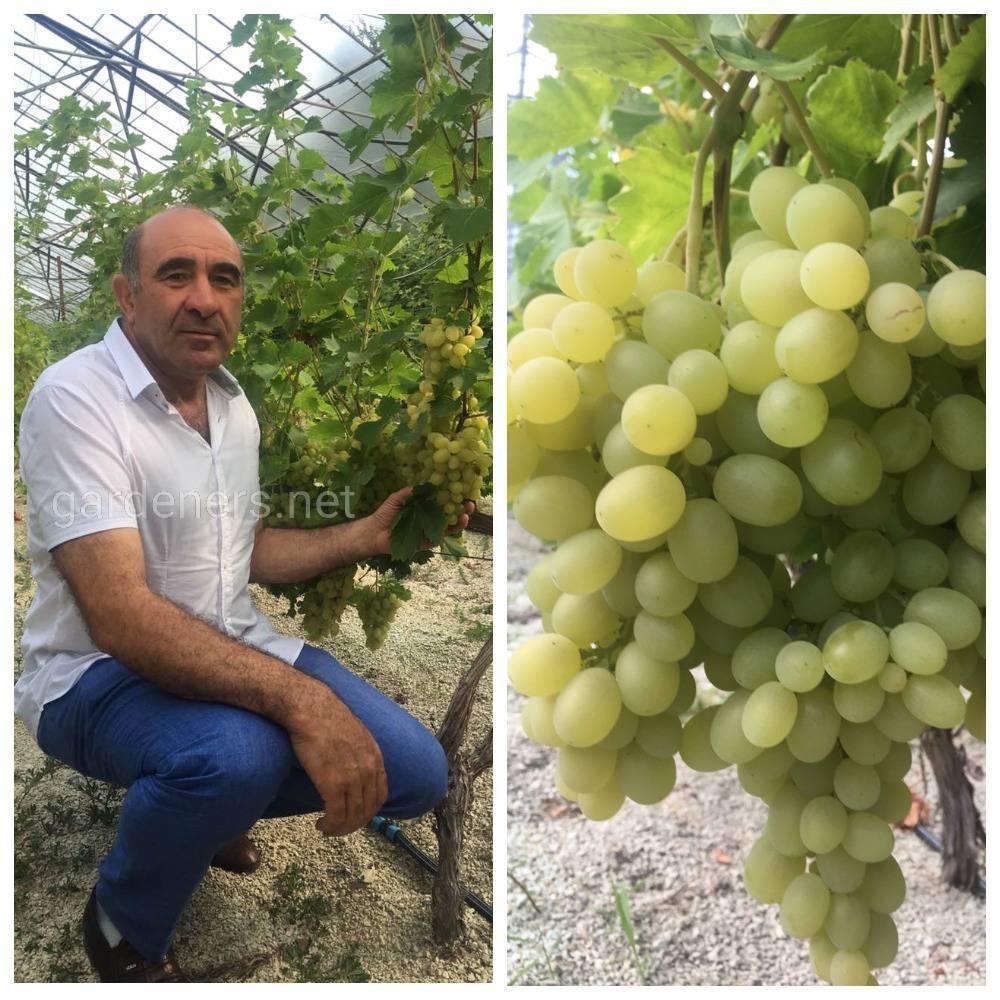 Органічне виноградарство», Самвел Мкртчян