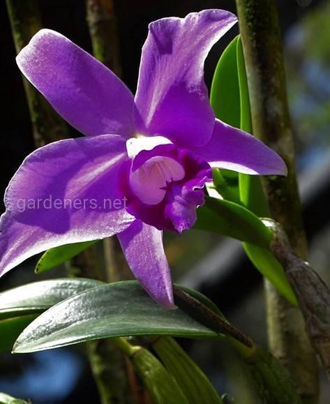Цветы Коста-Рики