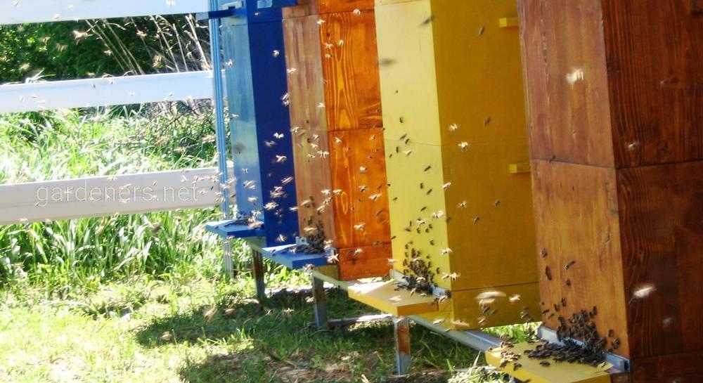 Виды ульев для пчёл. Этапы создания улья