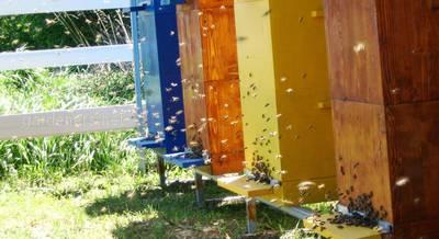 улья для пчел.jpg