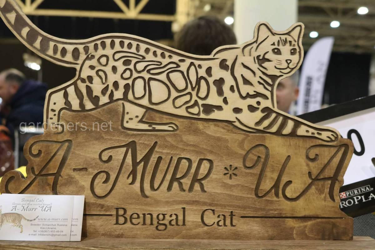Питомник бенгальских кошек AMurrUA