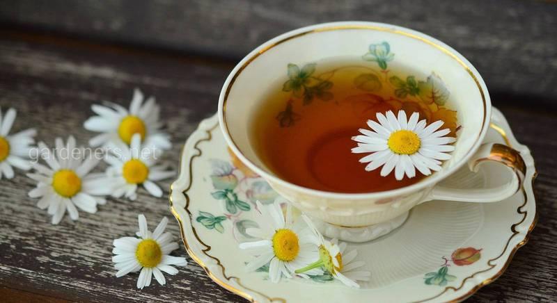 полезный чай (1)