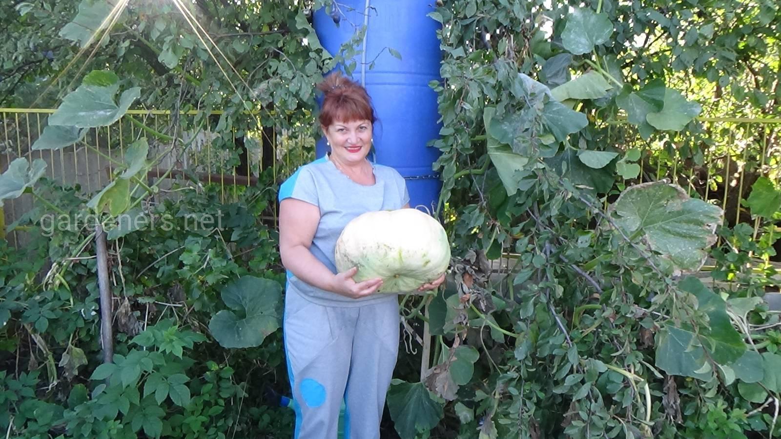 Гарбузовый урожай