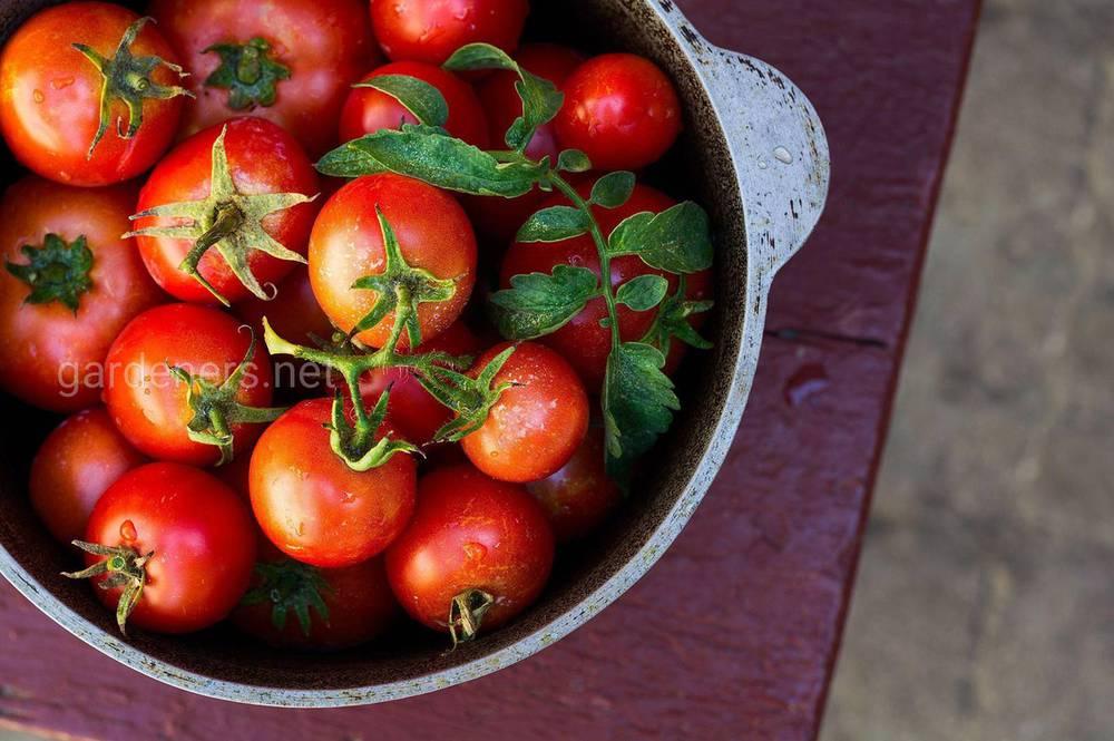 Томати - один з найважливіших продуктів при правильному харчуванні.