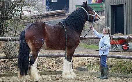 Лошадь Герцог