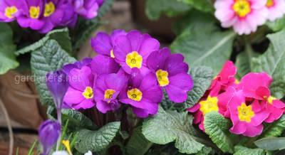 Комнатные растения для знака зодиака