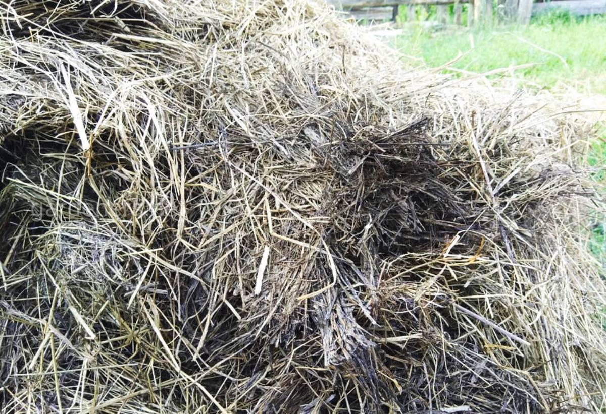 Внесение травяного компоста.