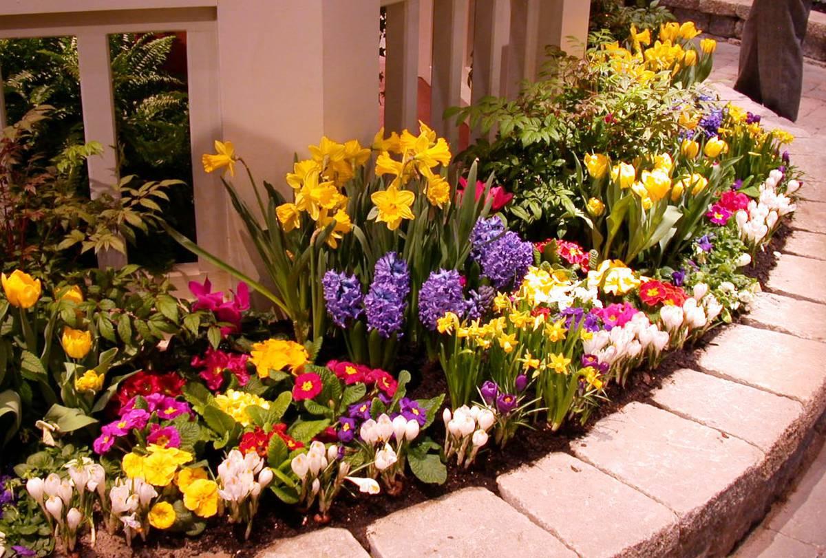 псковской как красиво посадить цветы на клумбе фото чем