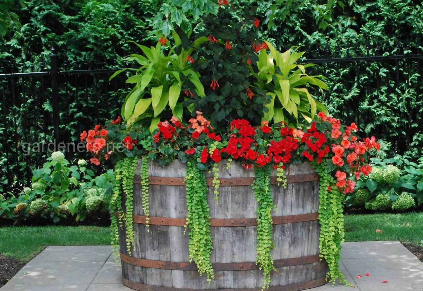 ампельные растения в кадке
