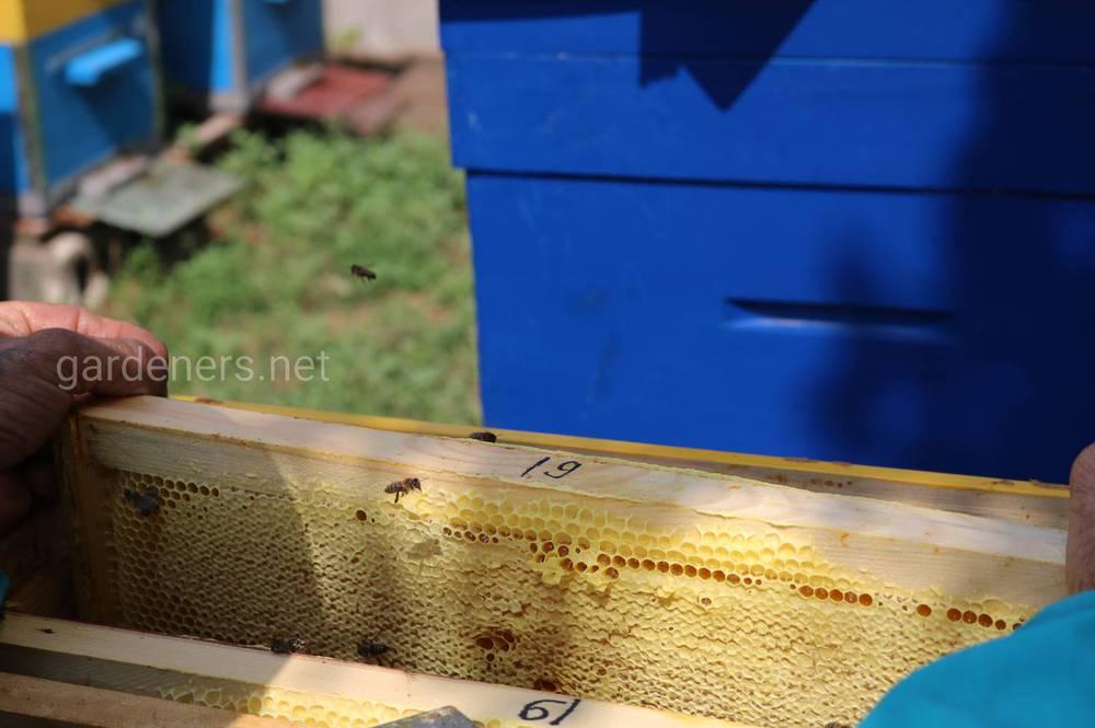 жизнедеятельности пчелиной семьи