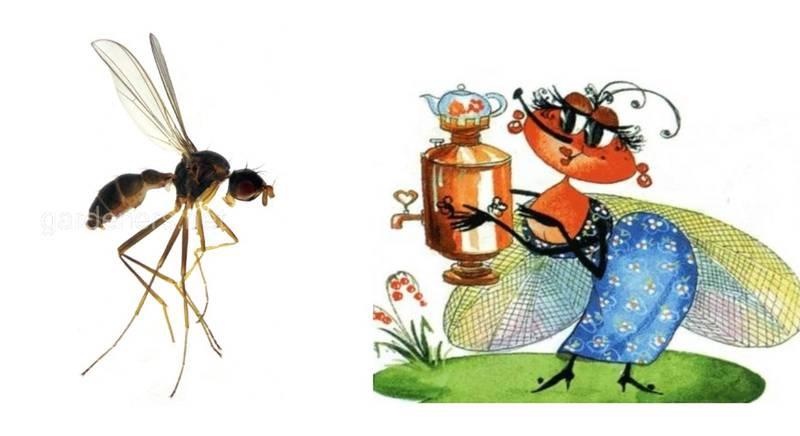 Так вот ты какая, Муха Цокотуха! Вид мух из Вьетнама назвали в честь литературного персонажа сказки К. И. Чуковского