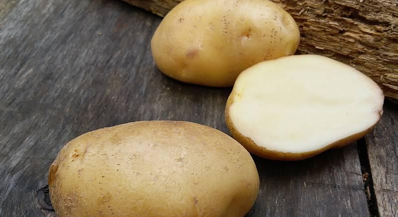 Сорта картофеля для длительного хранения