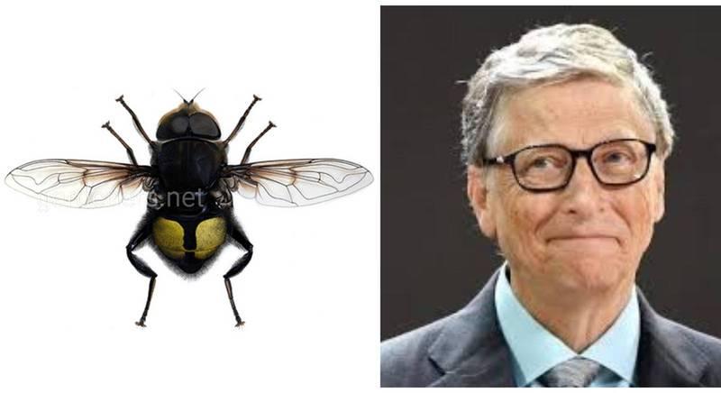 Кто она - муха, названная в честь Билла Гейтса?