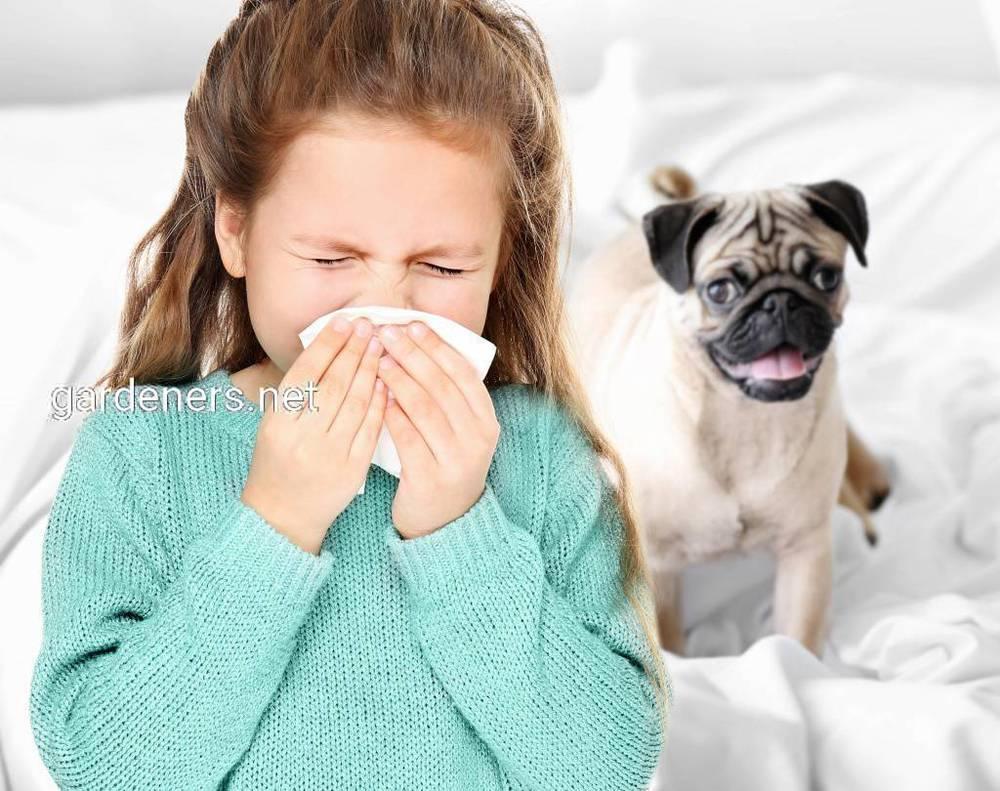 Породи собак, які підходять людям із алергією