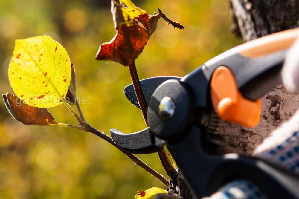 Осіння обрізка дерев та чагарників