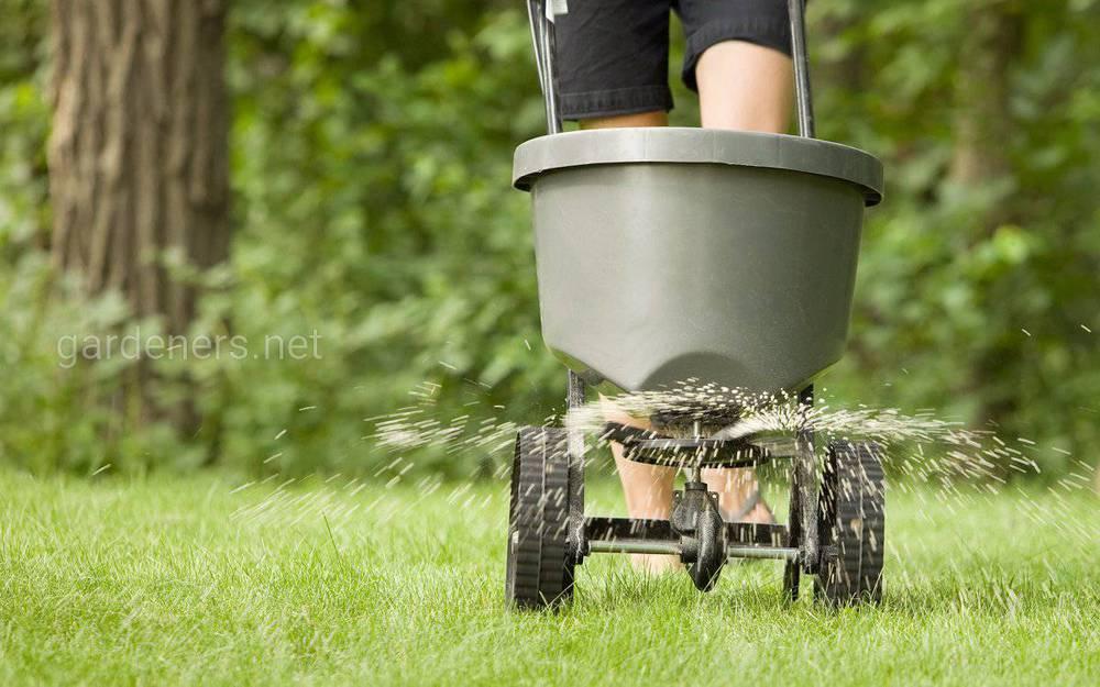 Уход за газоном — удобрение весной