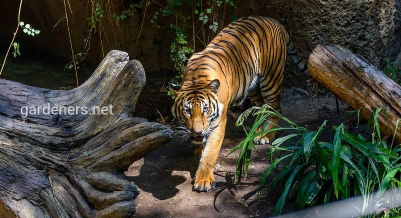 Зоопарк в Сан-Диего: история, животные, развлечения