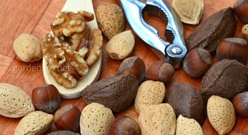 Разнообразие представителей орехового семейства