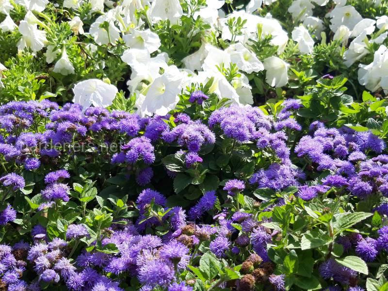 Какие садовые цветы любят солнце, а какие тенистые места?