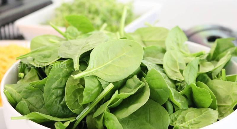 Заморозка шпината: полезные рекомендации