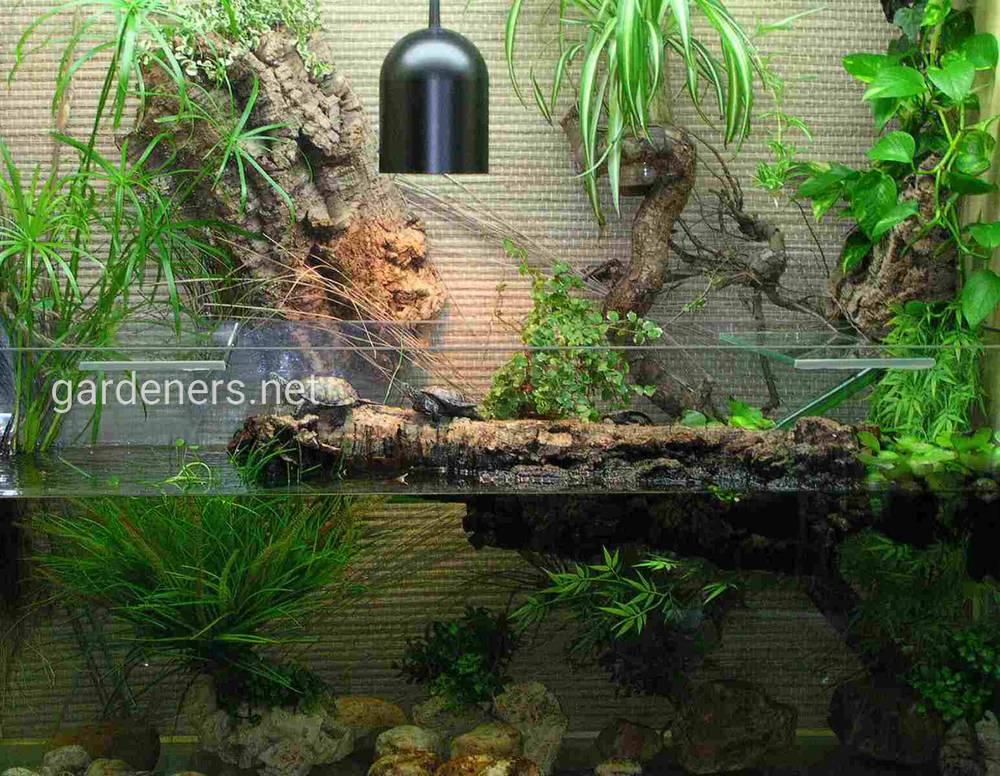 Растение в аквариуме для черепах