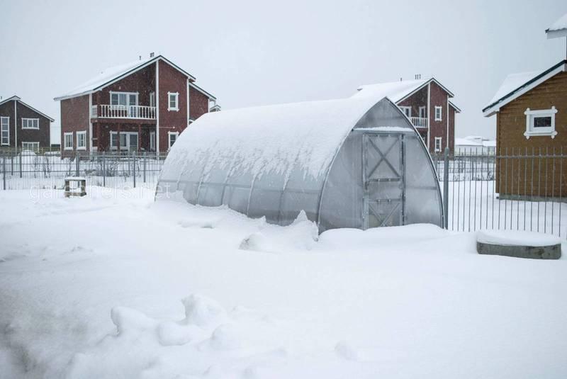 Які провести роботи та що посіяти в теплицях в жовтні, листопаді та грудні?