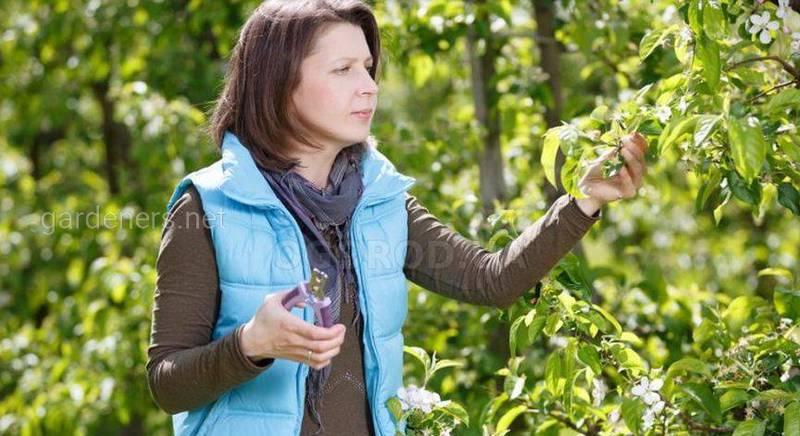 Чем отличается сад пермакультуры от классических районов производства овощей?