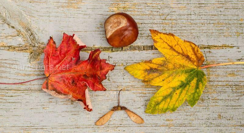 О чем расскажет погода в ноябре: приметы и поверья