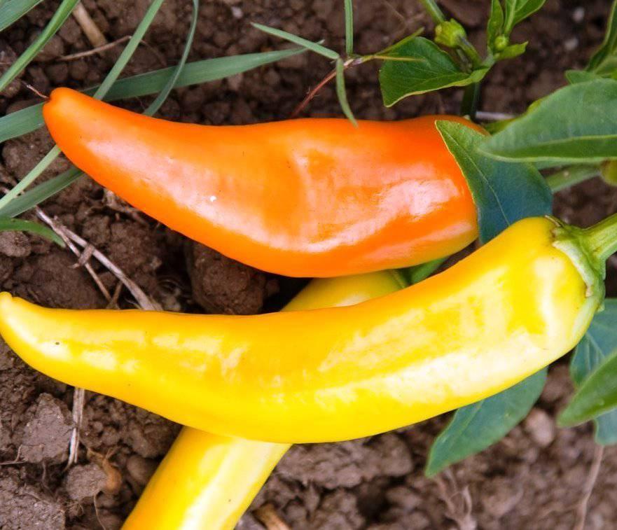Сорт перца Венгерский желтый