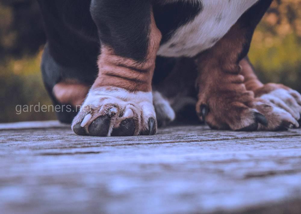 Зачем собакам мыть лапы