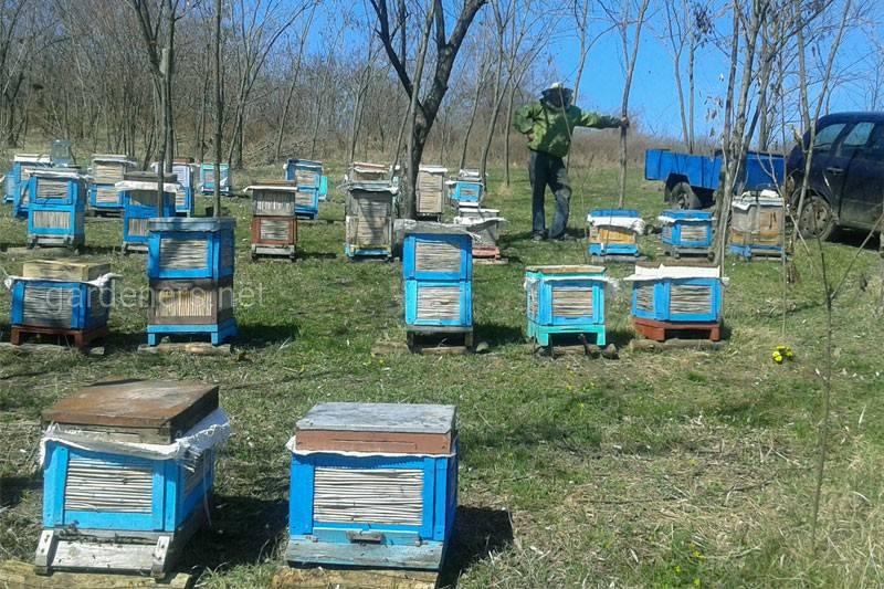 Які роботи необхідно зробити бджоляру в травні?