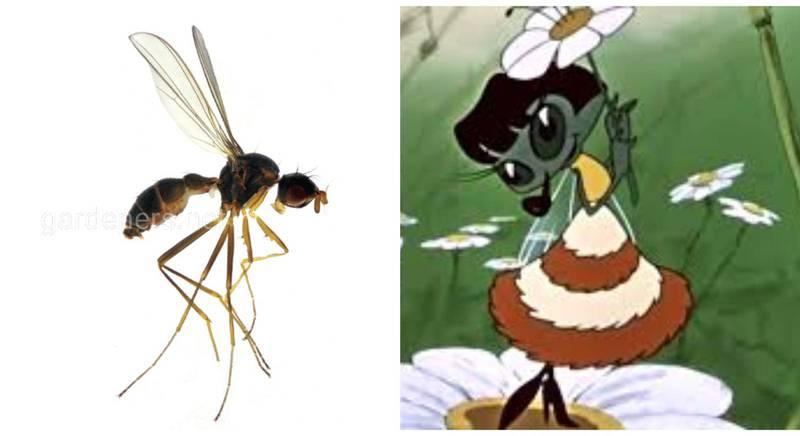 Новий вид мурахівкових мух було названо Mucha tzokotucha, на честь мухи-цокотухи з казки К. І. Чуковського