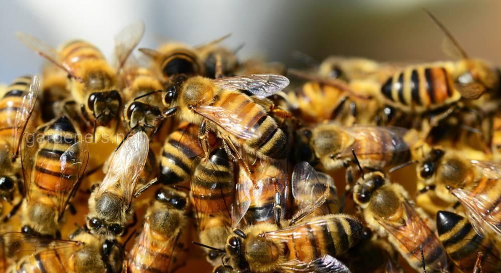 подготовка пчел к зиме.jpg
