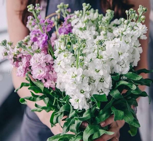 Цветы невероятно душистые и ароматные