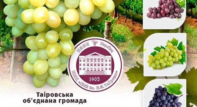 Виноградный калейдоскоп-2019