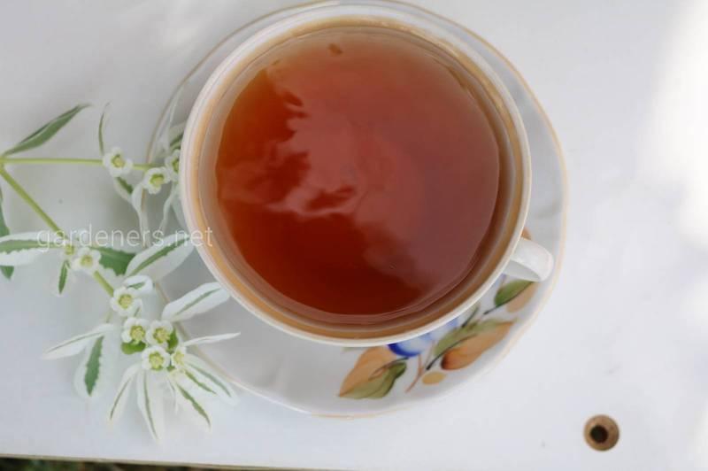 Які переваги та наслідки для здоров'я має чорний чай?