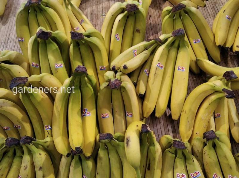 14 цікавих фактів про банани