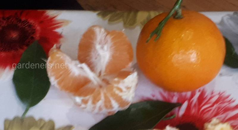 Мандарин мандарину рознь или что такое клементины