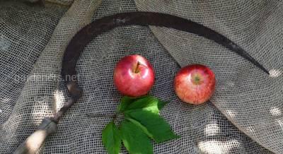 Возвращение в практику садоводства кос и серпов