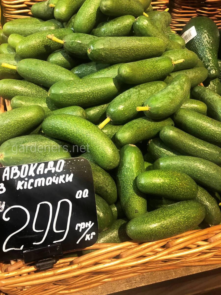 авокадо без косточки купить