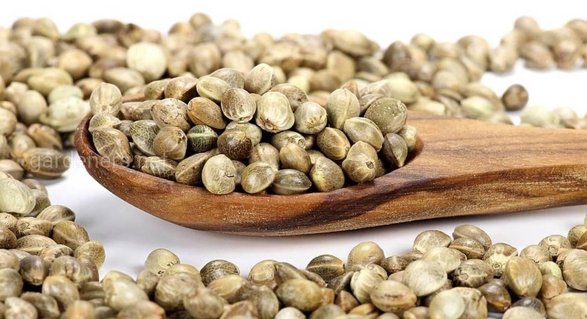Конопля плод и семян как действует на женщину марихуана