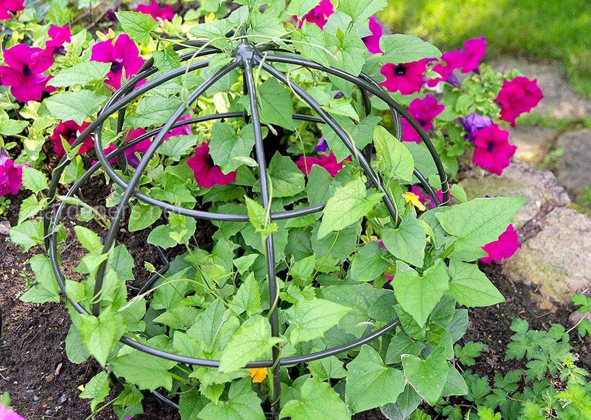 вьющиеся растения в клумбе