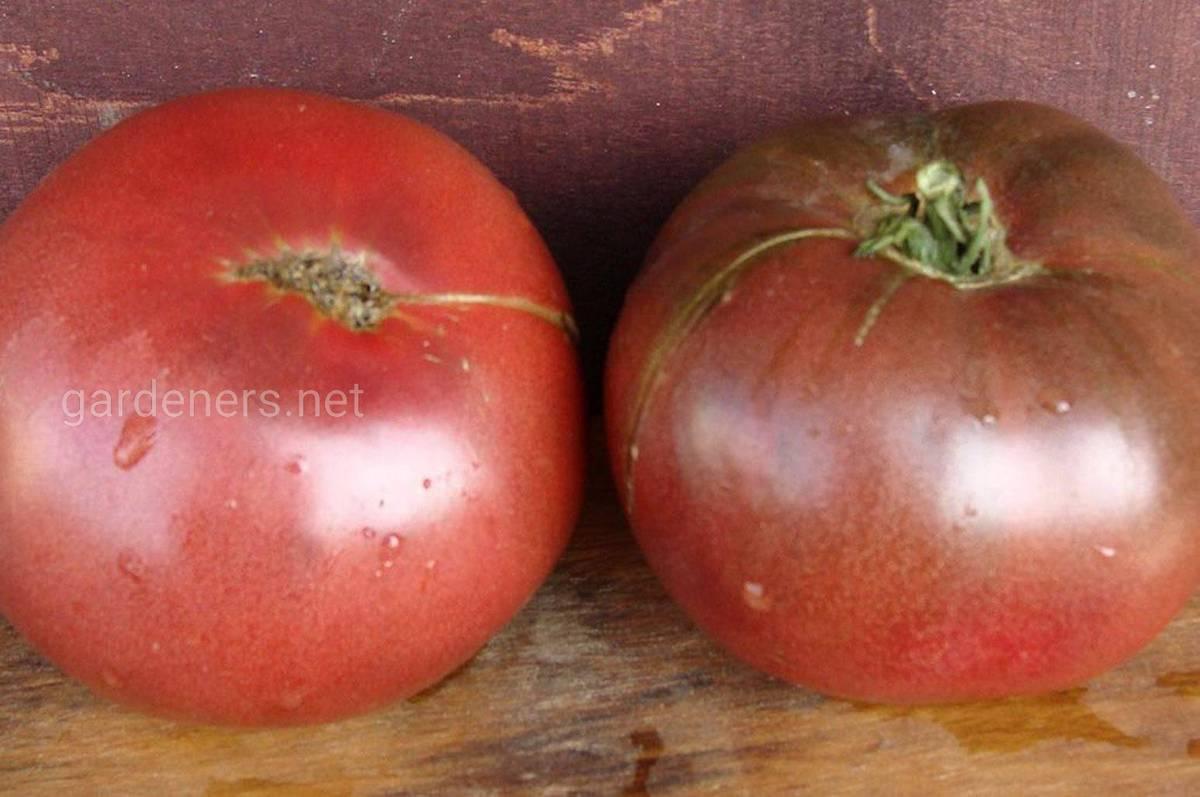 Сорт томата Cherokee Purple