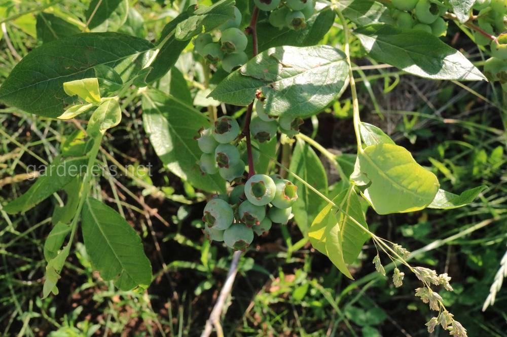 удобрение для растений Сульфат магния